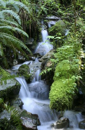 Theta Forest Stream Relaxation